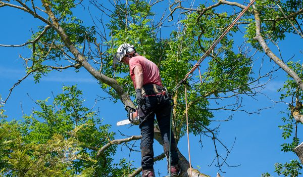 How You Can Tap Into Comprehensive Knowledge That Someone Else Has When Booking Something Such As A Professional Tree Survey