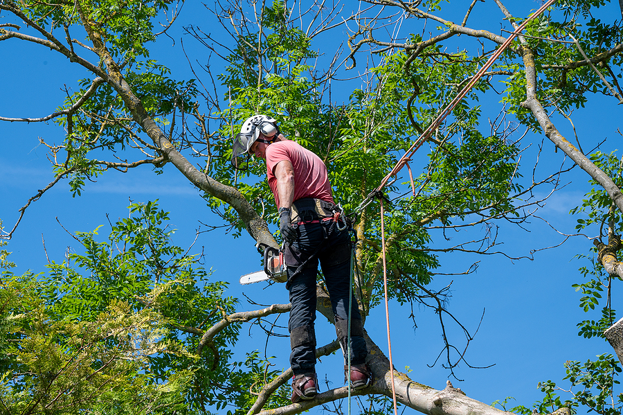 A tree surgeon doing a tree survey
